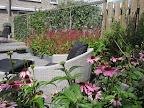 Persicaria en  Echinaceae geven de tuin veel kleur.