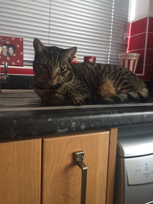 gizmo the kitty
