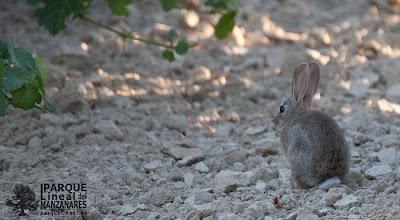 conejo-parque-lineal.jpg