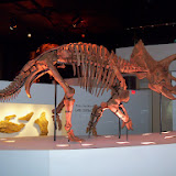 Houston Museum of Natural Science - 116_2672.JPG