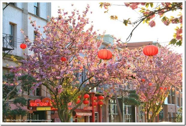 160410_Victoria_Chinatown_0007