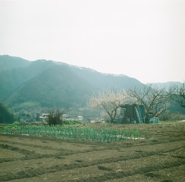 ローライコード 早春