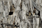 VESTIGES   Moineau dans une bataillée abandonnée