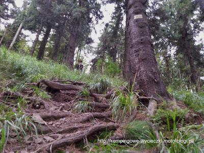 na zdjęciu stromy żółty szlak na Waligórę