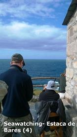 Seawatching- Estaca de Bares (4)