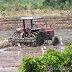 2014-08-19 10-28 Północne Peru - pola ryżowe ze specjalnymi ciągnikami.jpg