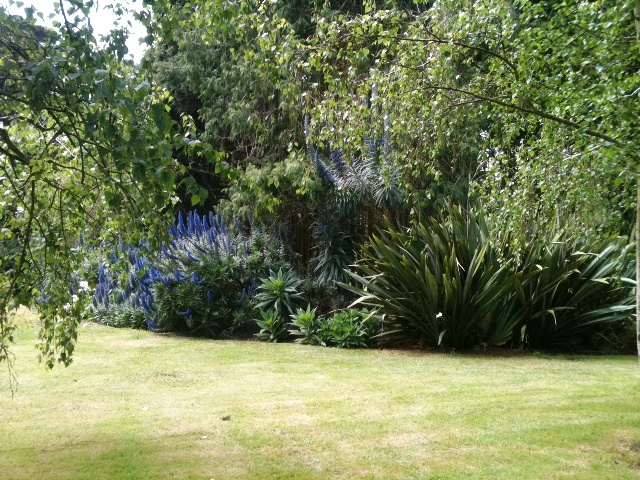 external image Echium-and-Phormium-cookianum.jpg