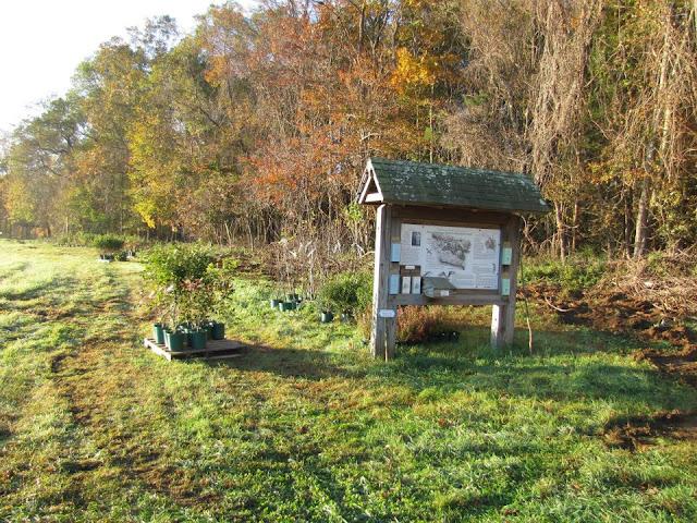 Guilford Salt Meadows Sanctuary Planting - 310801_10150343159764480_730539479_8052557_248951946_n.jpg