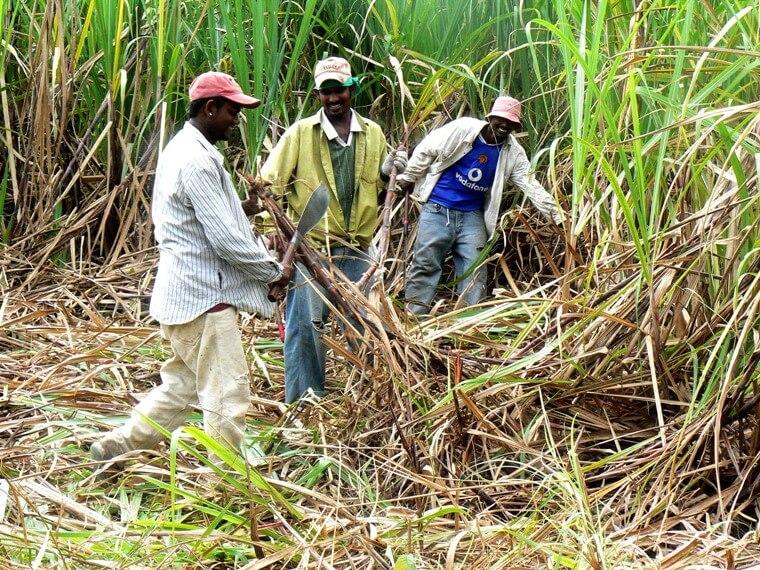 Kibos Sugar farmers in Kisumu. PHOTO   NMG