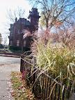 Adams Street and tall grass