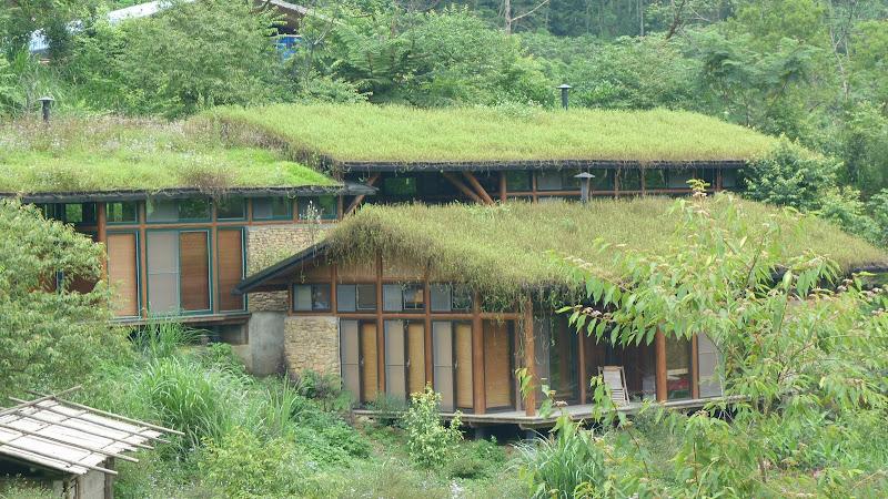 gravillon, terre et fleurs sur le toit.