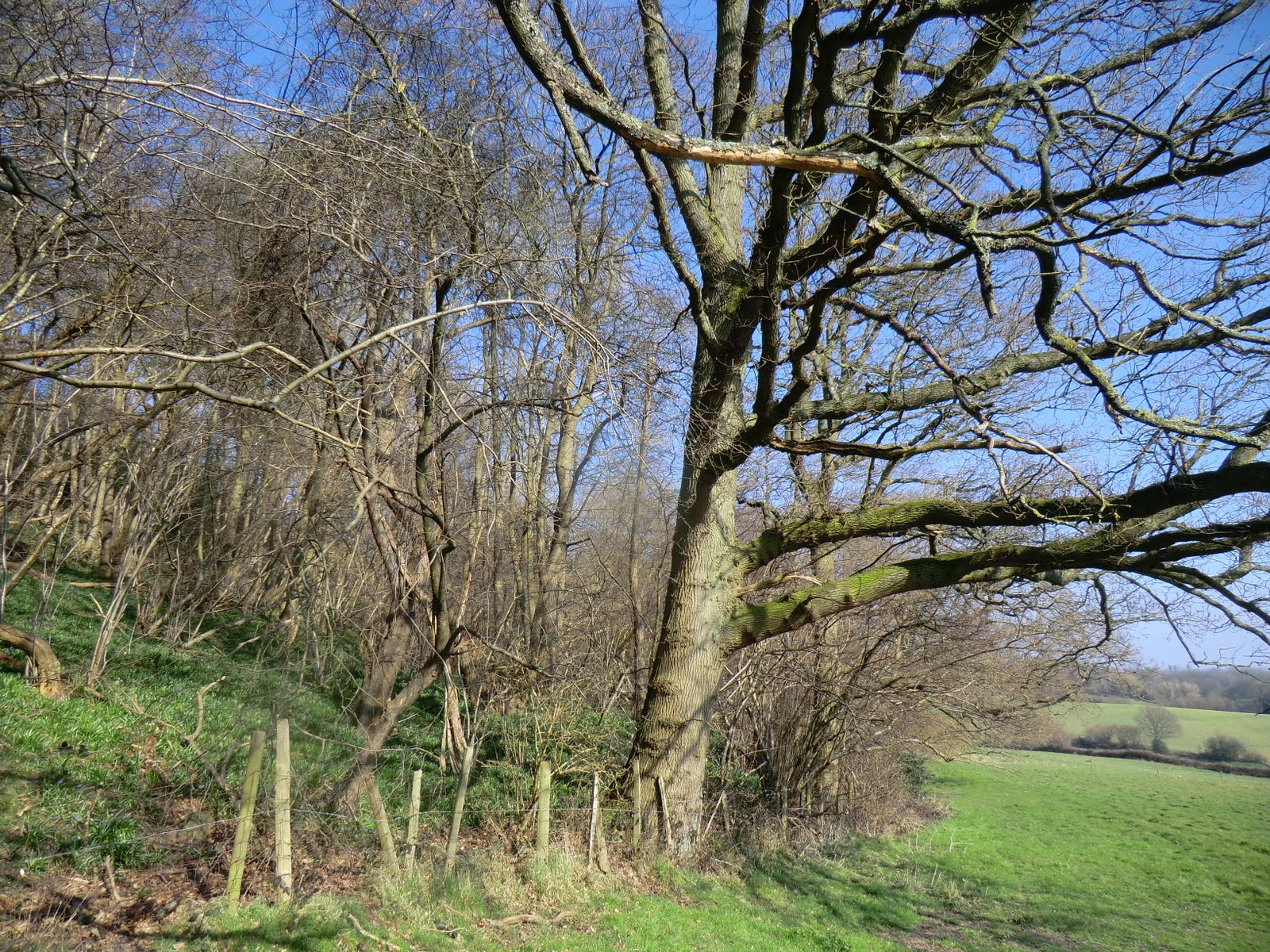 CIMG2891 Alongside the bottom of Tenchleys Wood