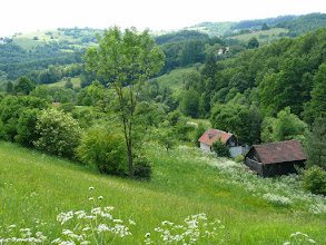 Photo: Louka Lanovka, v pozadí Žítkovský vrch