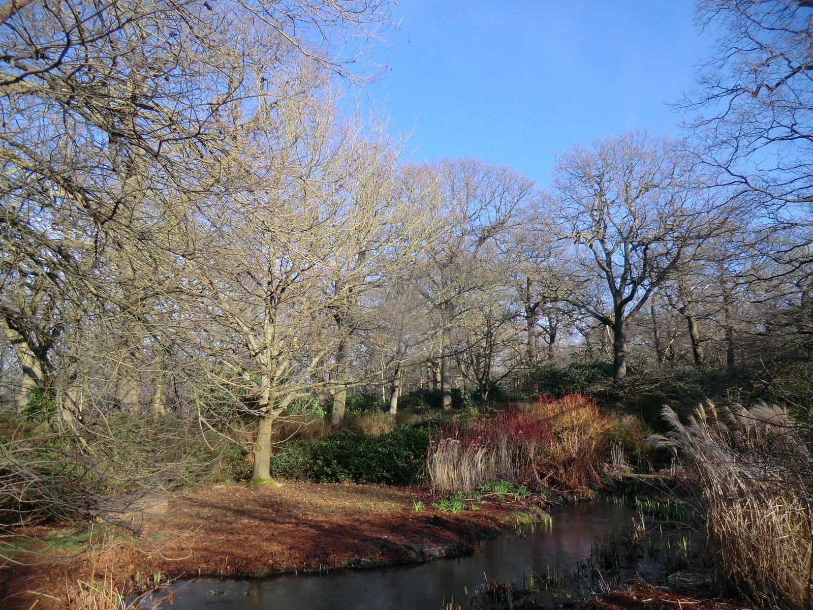 CIMG2297 Bog Garden, Isabella Plantation