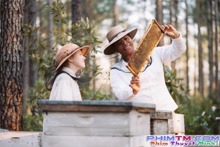 Xem Phim Tìm Lại Yêu Thương - The Secret Life Of Bees - phimtm.com - Ảnh 1