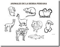 SIERRA PERUANA ANIMALES 1