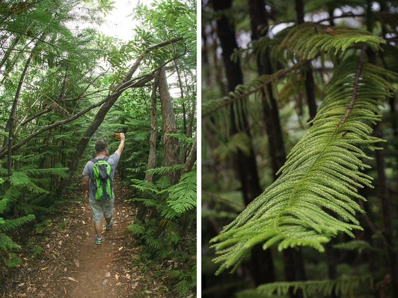 hanalei forest