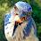 Bryson Lovett (Bird Photo Booth)'s profile photo