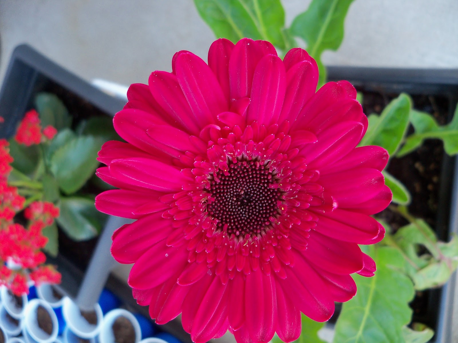 Gardening 2010 - 101_0480.JPG