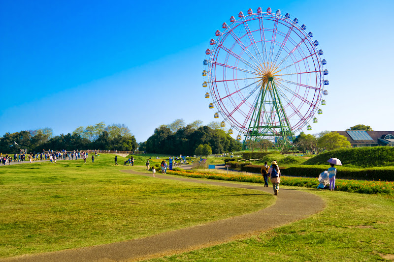 Hitachi Seaside Park Ferris wheel photo1