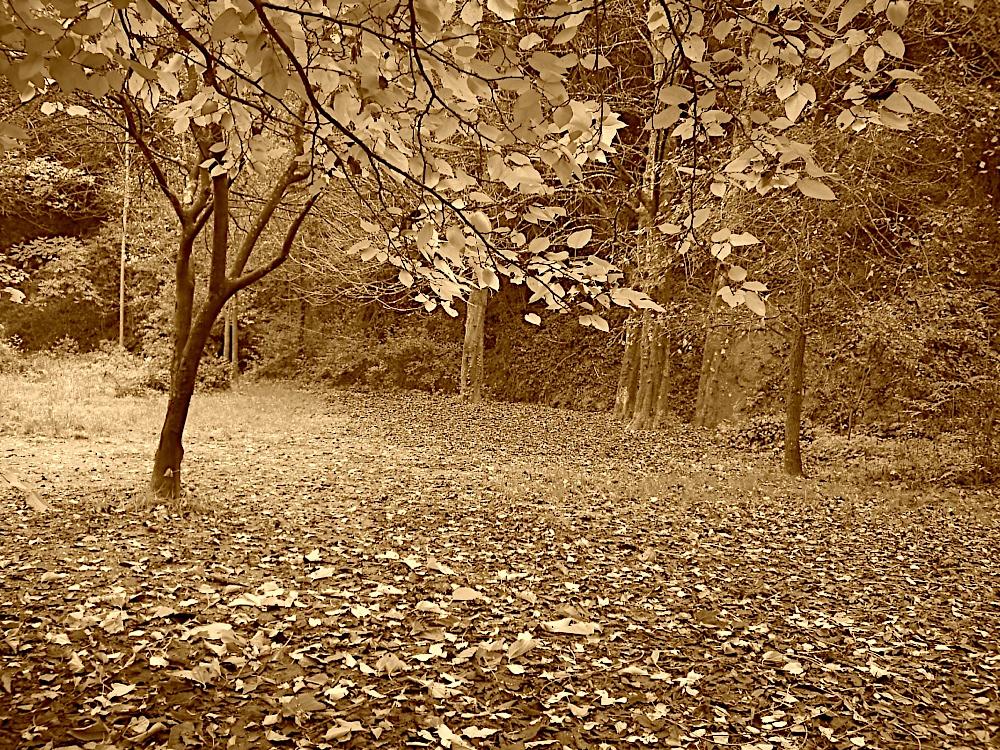Fotos Sortida Raiers 2006 - PICT1946.JPG