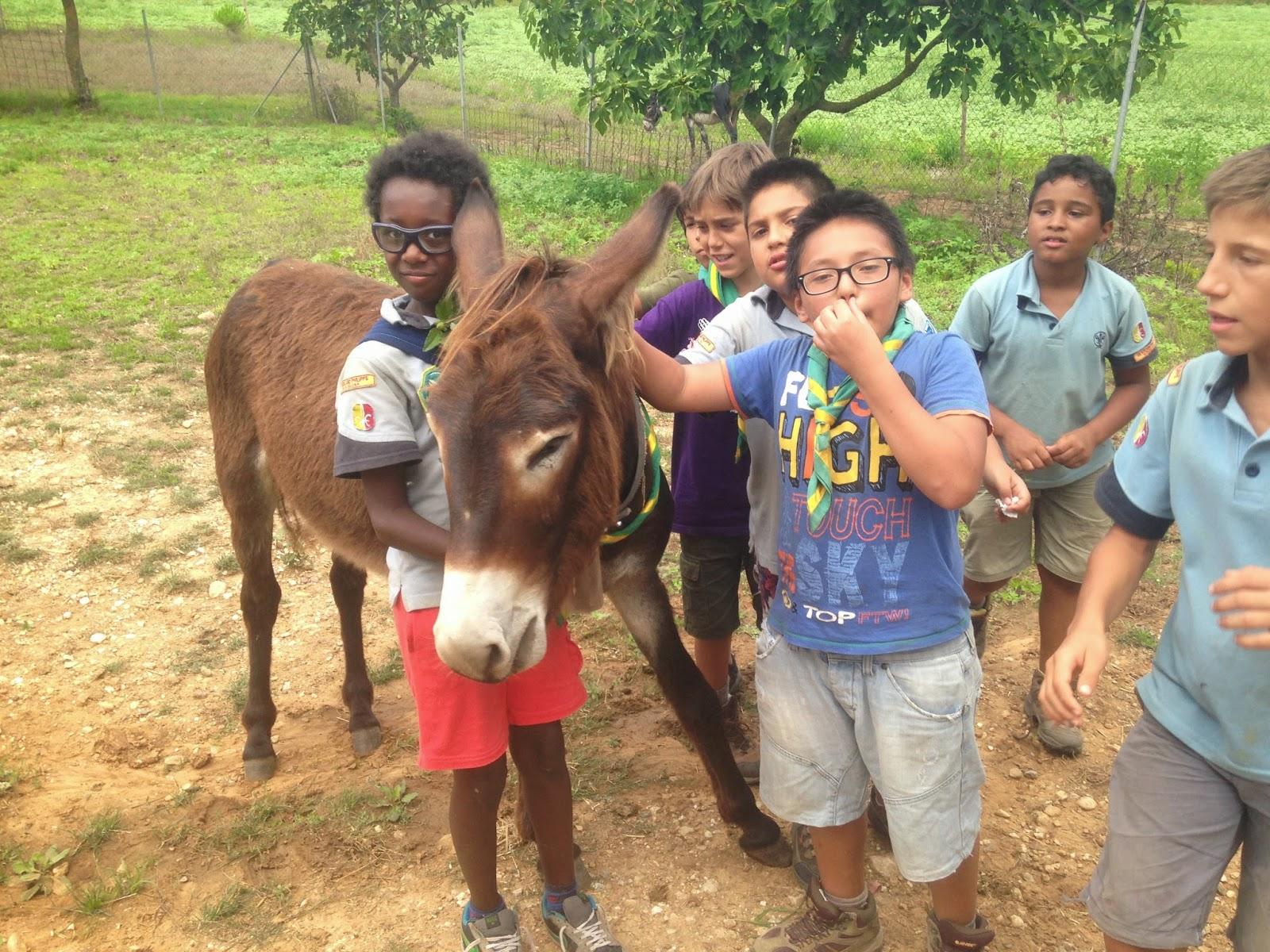 Campaments Estiu Cabanelles 2014 - IMG_0058.JPG