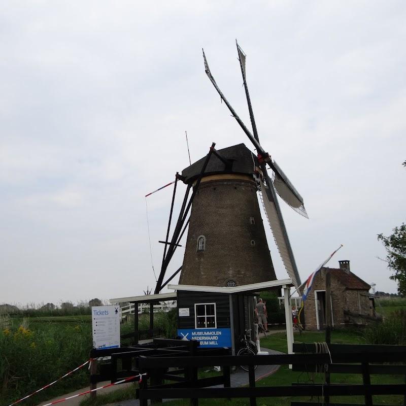 Day_6_Kinderdijk_17.JPG