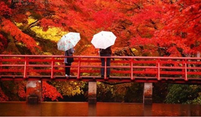 Japan Fall Colors Wallpaper Kyoto In Color