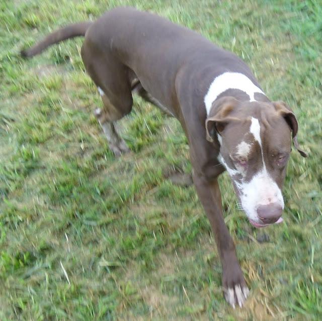 Jasper @ 16 months!