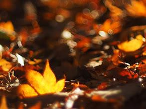 Photo: 秋はカサコソ