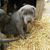 Star & True Blues February 21, 2008 Litter - HPIM1090.JPG