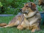 Farmers unhappy with dog chip news