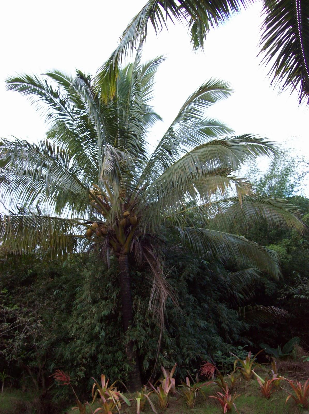 Hawaii Day 5 - 100_7267.JPG