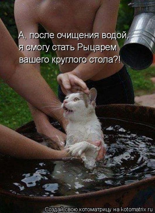 1413567542_kotomatricy