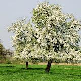 Fotowedstrijd hoogstamboomgaarden - 2009
