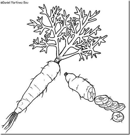 zanahoria.png