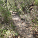 Track south of Piles Creek and Girrakool (179130)