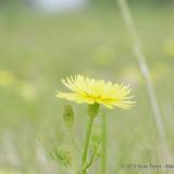 2013 Spring Flora & Fauna - IMGP6375.JPG
