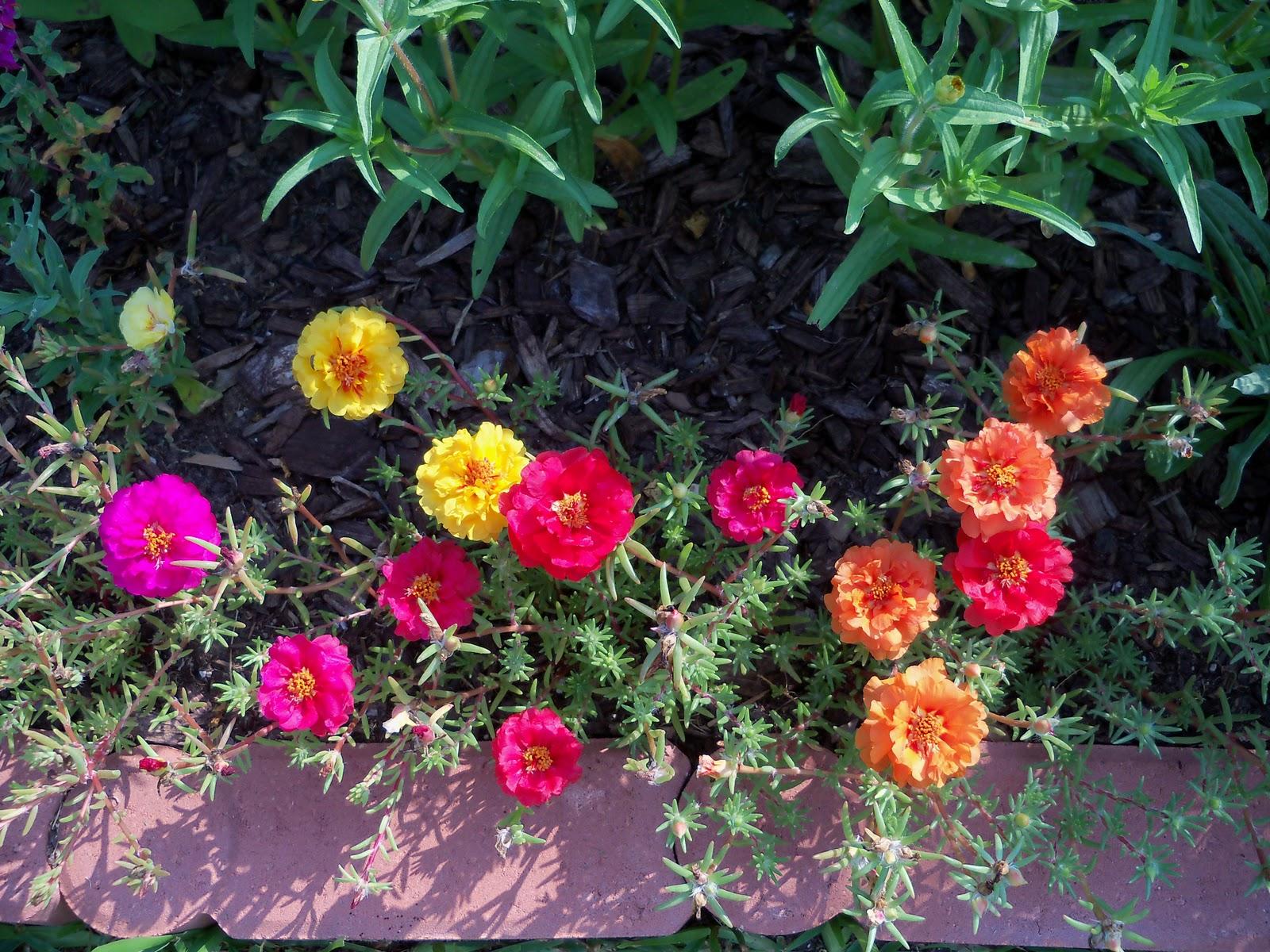 Gardening 2010, Part Two - 101_3024.JPG