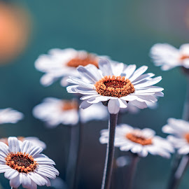 by Michael Böckling - Flowers Flowers in the Wild