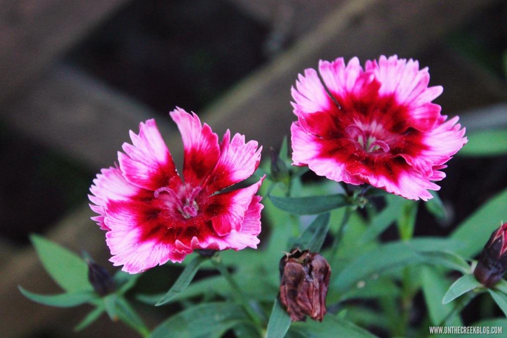 [flower6%5B10%5D]