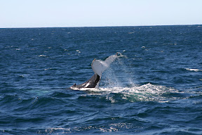 Whale tail underside