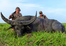 Another massive floodplain bull taken by Mr Oyvind Christensen with a 470 NE double rifle. This bull scores 99 SCI due to a broken tip on the left, otherwise he would be over 100 points. The bull is massive, they just don't get much heavier.