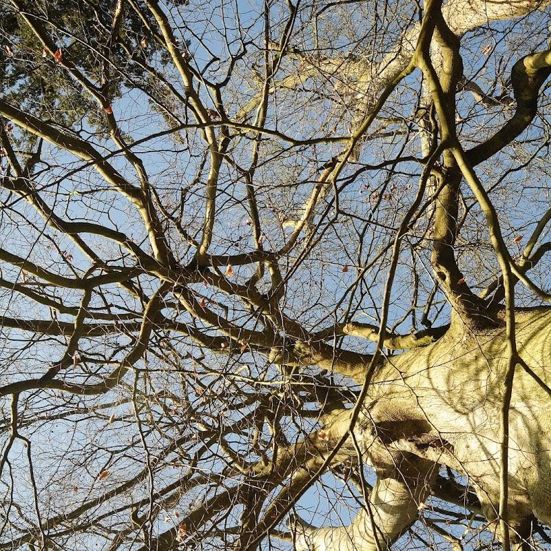 Stowe_Trees_11.JPG