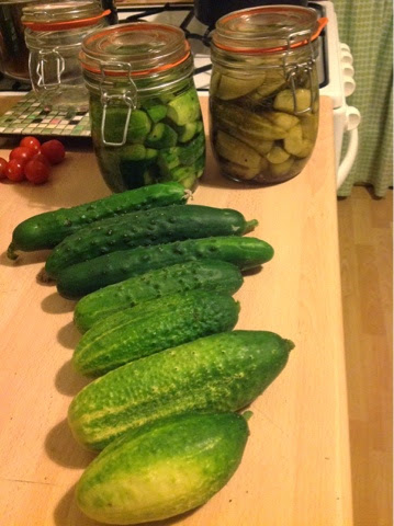 Cucumbers and gherkins for pickling