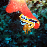 Red Sea 2014 - Underwater Colors - Part 1