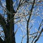 tn_lachaux-2010-12-51.jpg