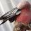 Rhubarb Mmmmq's profile photo