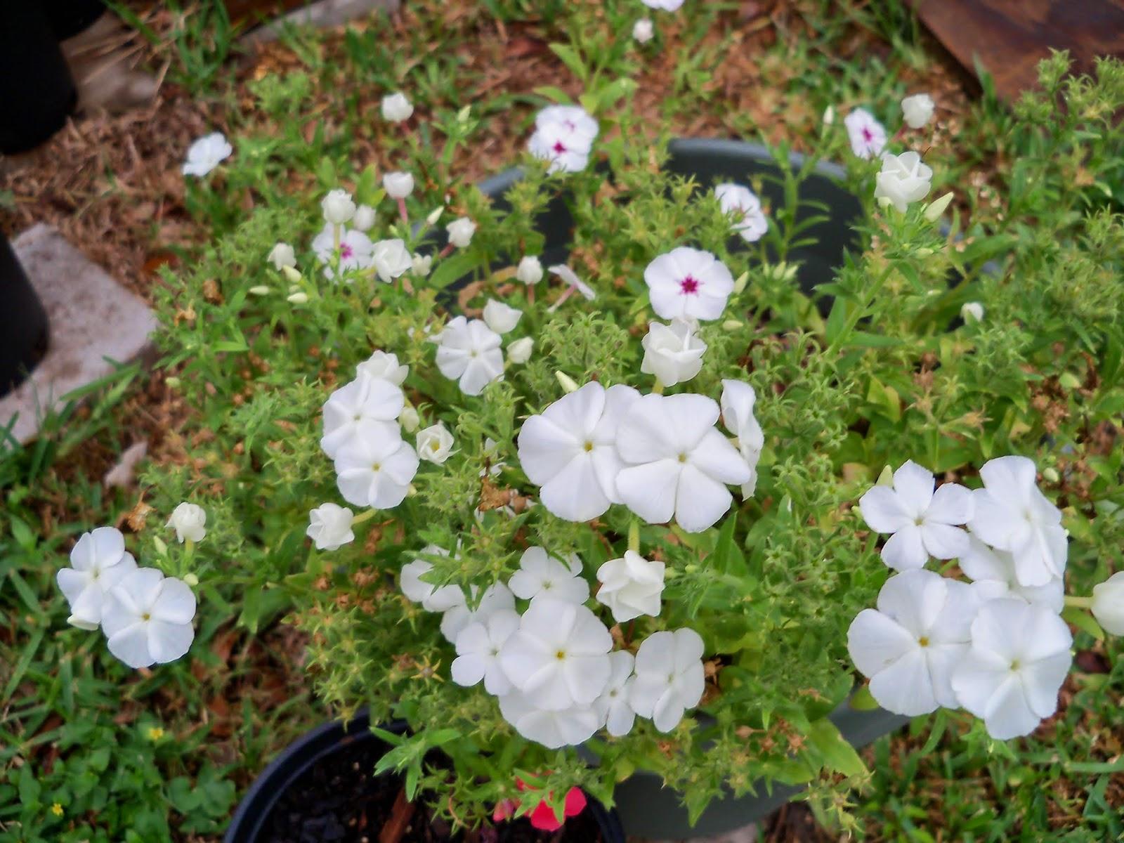 Gardening 2014 - 116_1855.JPG