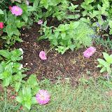 Gardening 2012 - IMG_3520.JPG